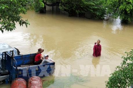 Phú Yên: Cứu sống người đàn ông sau 11 giờ đu bám trên cây tránh lũ