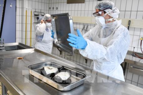 Một số thị trường hạn chế nhập khẩu gia cầm từ Đức do virus H5N8 bùng phát