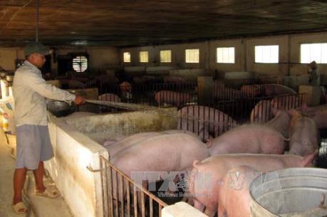 Đề xuất đưa Cysteamine vào danh mục chất cấm sử dụng trong thức ăn chăn nuôi