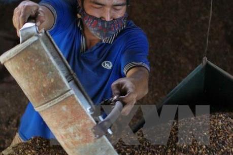Dự báo giá cà phê thế giới tuần từ 26/12 - 31/12