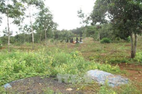 Trả hồ sơ điều tra bổ sung vụ xô xát vì tranh chấp đất rừng tại Đắk Nông