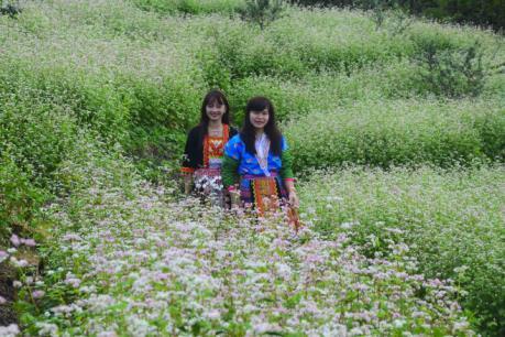 Vườn hoa tam giác mạch trên đỉnh đèo Pha Đin