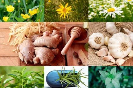 18 loại thảo dược có tác dụng chữa bệnh ngay trong gian bếp nhà bạn