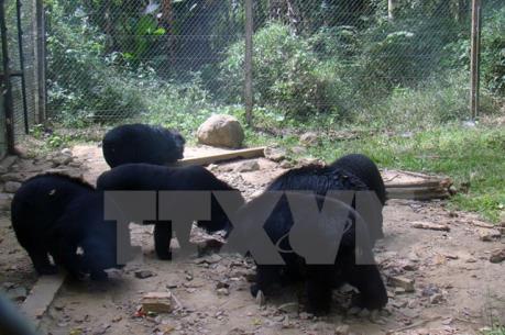 Lập chuyên án triệt phá các đường dây mua, bán động vật hoang dã