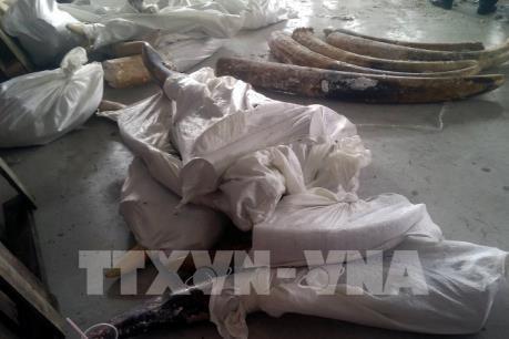 Tp. Hồ Chí Minh phát hiện 529 kg ngà voi giấu tinh vi trong các khúc gỗ