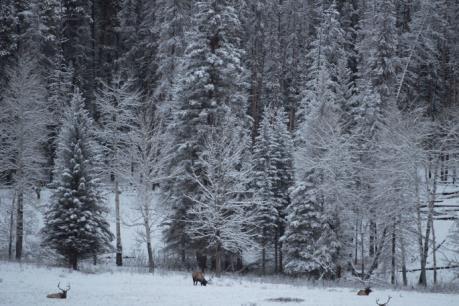 Bão tuyết hoành hoành trên toàn lãnh thổ Canada
