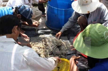Canada - thị trường tiềm năng cho tôm chân trắng Việt Nam