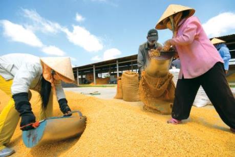 Giá gạo sẽ không có nhiều biến động