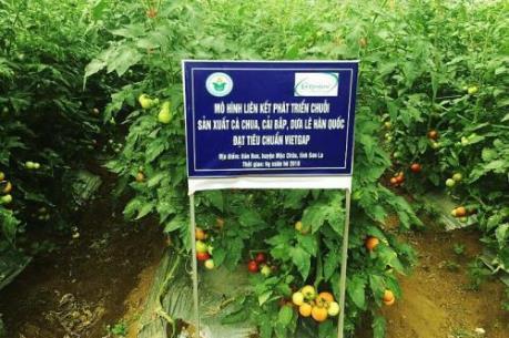 VinEco hỗ trợ tối đa 300 triệu đồng/hộ nhằm thúc đẩy sản xuất nông nghiệp