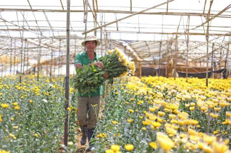 Làng hoa đầu tiên của thành phố Đà Lạt