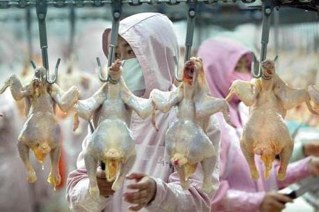 """Có nên """"siết"""" hàng rào kỹ thuật đối với thịt nhập khẩu?"""