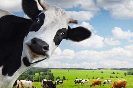 Tỷ phú Thái chi hơn 11 nghìn tỷ gom cổ phiếu công ty sữa lớn nhất Việt Nam