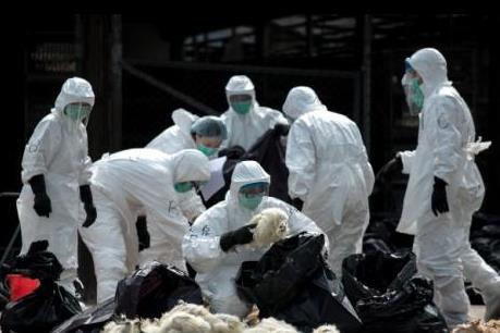 Trung Quốc xác nhận ca nhiễm mới cúm gia cầm H7N9