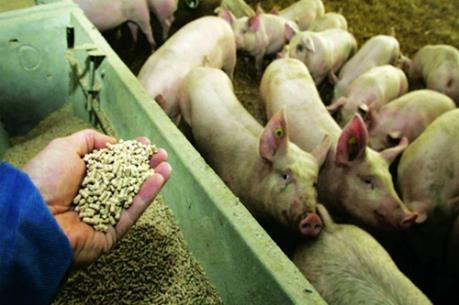 Xử lý nhiều doanh nghiệp sai phạm trong nhập khẩu nguyên liệu kháng sinh