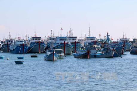 Khởi công xây dựng khu neo đậu tránh trú bão cho hơn 500 tàu cá tại Bến Tre