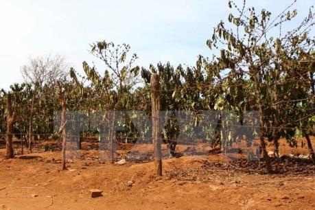 Gia Lai thu hồi hơn 4.100 ha đất sử dụng kém hiệu quả