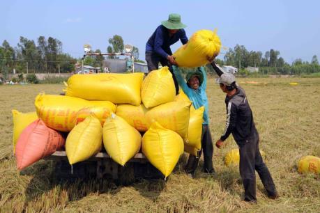 Gạo Việt vẫn cạnh tranh ở phân khúc chất lượng cao