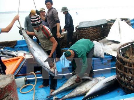 Mỹ tăng nhập thăn, philê cá ngừ của Việt Nam