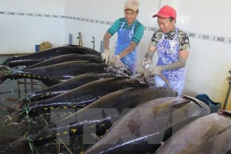 VASEP kiến nghị giảm thuế nhập khẩu cá ngừ Việt Nam vào Nhật Bản