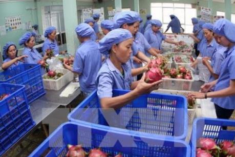 """""""Dấu ấn"""" trong xuất khẩu trái cây"""