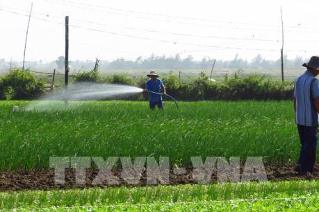 Cơ hội nào cho xuất khẩu rau quả của Việt Nam?