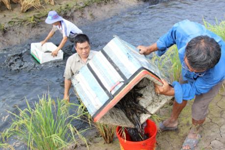 Nông dân lo lắng vì giá tôm càng xanh bất ngờ sụt giảm