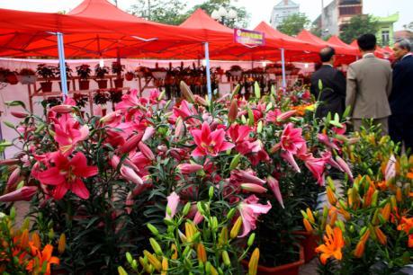 Hoa Hoành Bồ đua nhau khoe sắc tại Hội Xuân 2017