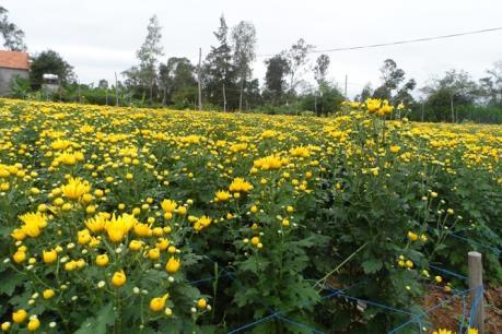 Làng hoa Lý Trạch rộn ràng vào Xuân