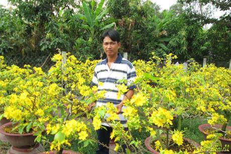 Thành phố Hồ Chí Minh: Mưa trái mùa khiến người trồng mai điêu đứng
