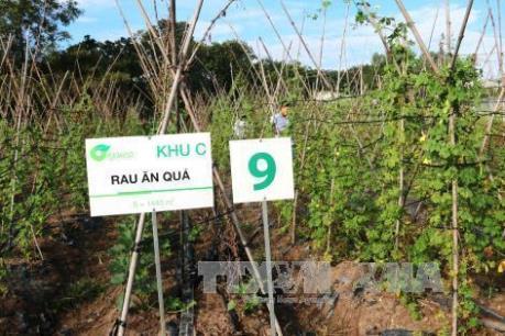 Nhiều rào cản cho phát triển nông nghiệp hữu cơ