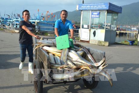 Ngư dân Đà Nẵng tất bật vươn khơi những ngày giáp Tết