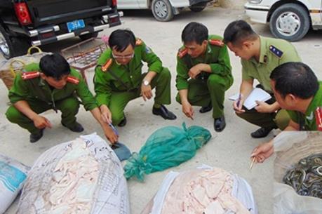 Hưng Yên bắt giữ hơn 500 kg bì lợn ôi thiu chuẩn bị đưa đi tiêu thụ