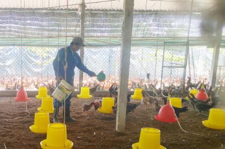 Phát triển xu hướng chăn nuôi hữu cơ