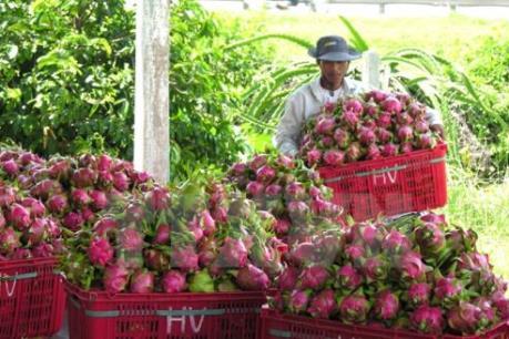 Australia đồng ý về nguyên tắc việc nhập khẩu thanh long tươi từ Việt Nam
