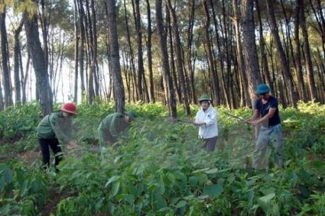 Các địa phương tập trung trồng rừng ngay từ đầu năm