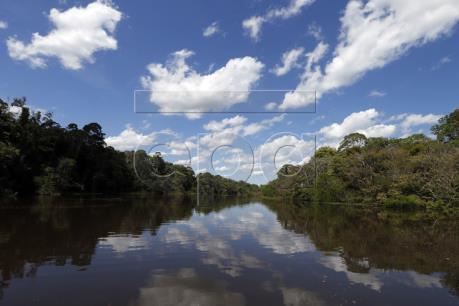 Phát triển hạ tầng - Thủ phạm chính phá rừng Amazon