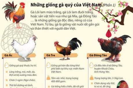 Năm Đinh Dậu nói về những giống gà quý của Việt Nam