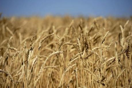 EU tìm cách đối phó với hao hụt ngân sách nông nghiệp sau Brexit