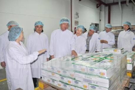 Vinamilk phối hợp với TPHCM xây dựng mô hình sản xuất lớn trong chăn nuôi bò sữa
