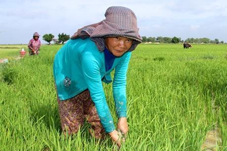 """USAID và IFAD """"bắt tay"""" để hỗ trợ Campuchia phát triển nông nghiệp"""