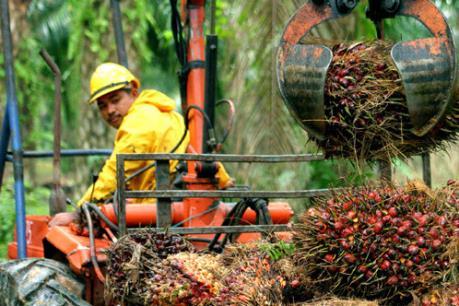 Indonesia dự tính xuất khẩu 27 triệu tấn dầu cọ thô