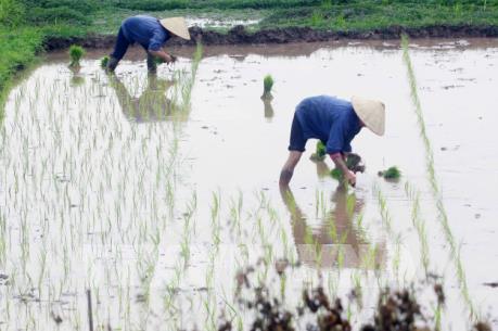 Có 85% diện tích đủ nước gieo cấy vụ Đông Xuân