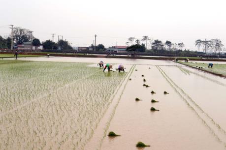 Nhiều địa phương cơ bản đủ nước gieo cấy vụ Đông Xuân