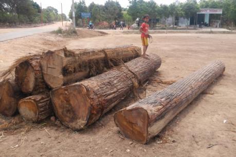 Khởi tố vụ phá rừng, cướp gỗ tại Chư Păh