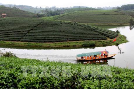 Ấn tượng đảo chè xanh mướt xứ Nghệ