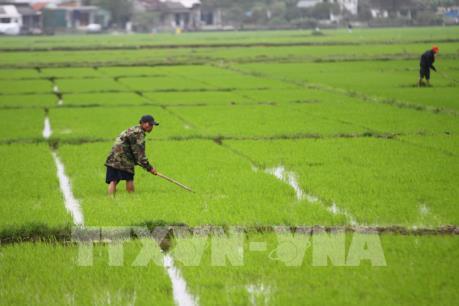 Gần 95% diện tích đã có nước để gieo cấy vụ Đông Xuân