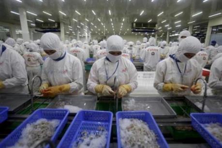 """Từ 7/7, Australia sẽ """"áp"""" điều kiện nhập khẩu tôm chặt chẽ hơn"""