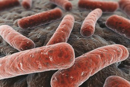 Phát hiện ca lao siêu kháng thuốc đầu tiên ở Đồng Nai