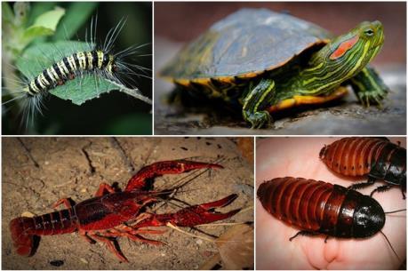 Những sinh vật ngoại lai nguy hiểm cấm nhập khẩu vào Việt Nam