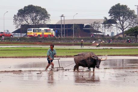 97% đồng ruộng của Hà Nội có nước sản xuất vụ Đông Xuân